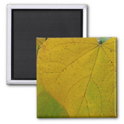 Yellow Redbud Leaves Magnet