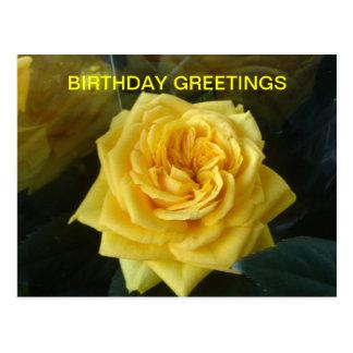 Yellow Rose Birthday Postcard