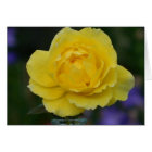 Yellow Rose Blank Greeting Card