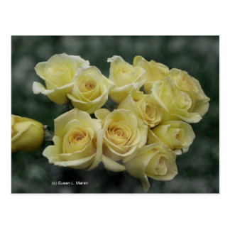 Yellow Rose bouquet spotted background Postcard