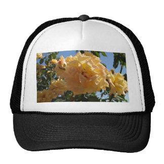 Yellow Rose Bush Hats