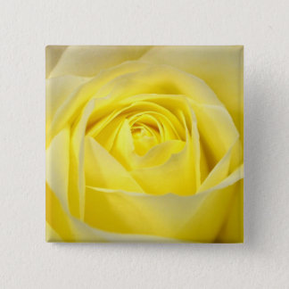 Yellow Rose Closeup 15 Cm Square Badge