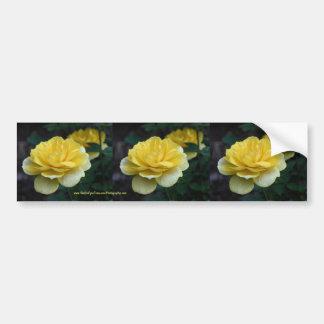Yellow Rose Flower Bumper Sticker Car Art