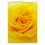 Yellow Rose Flower Close-up Note Card