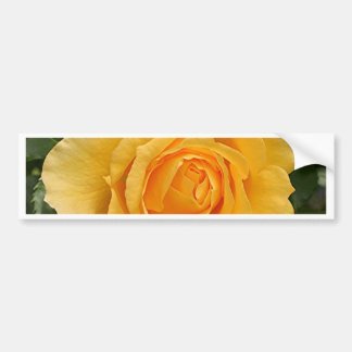 Yellow rose flower in bloom in garden 2 bumper sticker
