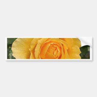 Yellow rose flower in bloom in garden 2 bumper sticker