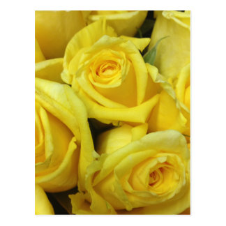 Yellow Rose Flowers Postcard