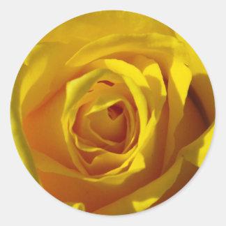 Yellow Rose Macro Round Sticker