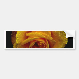 Yellow Rose of Love Bumper Stickers