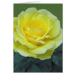 YELLOW ROSE, OF TEXAS? GREETING CARD