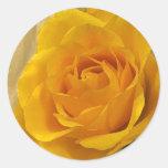Yellow Rose Petals