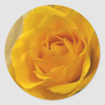 Yellow Rose Petals Round Sticker