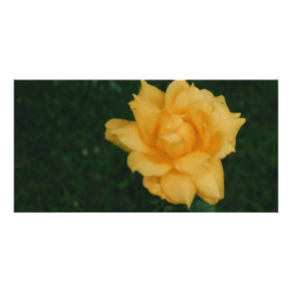 Yellow Rose Photo Cards