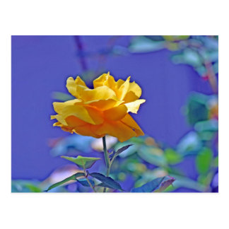Yellow Rose Postcard