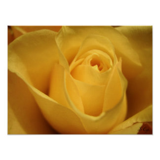 Yellow Rose, S Cyr Poster
