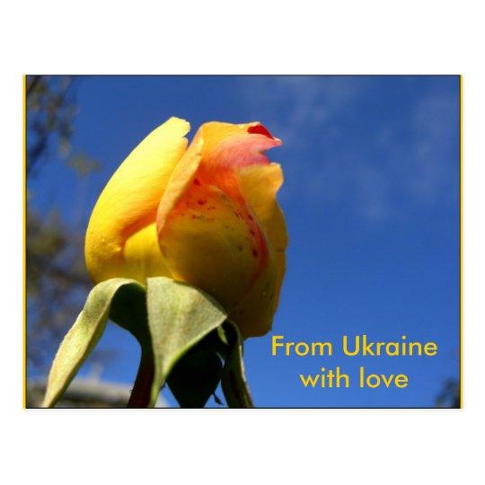 Yellow Rose Set Postcard