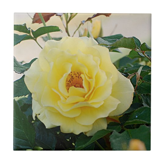 Yellow Rose Small Square Tile