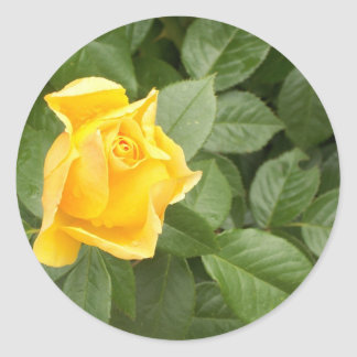 Yellow Rose with Green Leaves Stickers