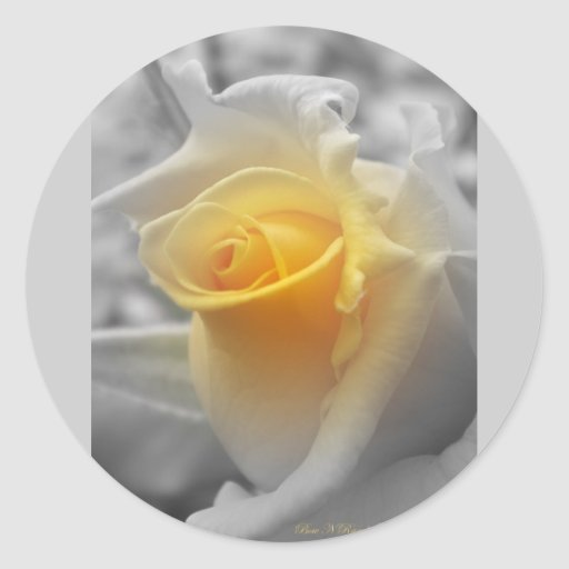 Yellow Rosebud Grayscale Round Sticker