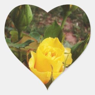 Yellow rosebuds! heart sticker