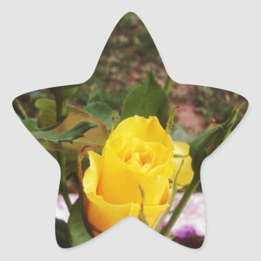Yellow rosebuds! star sticker