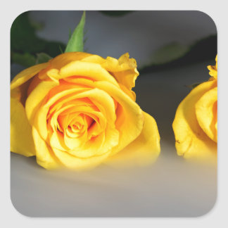Yellow Roses in the Mist Square Sticker