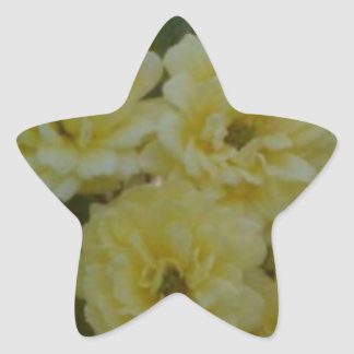 Yellow Roses Star Sticker