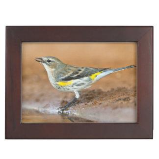 Yellow-Rumped Warbler (Dendroica Coronata) Keepsake Box