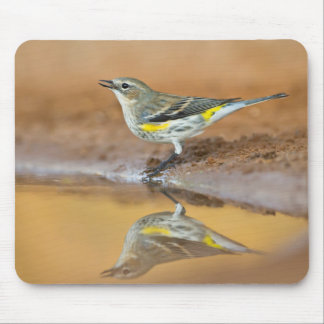 Yellow-Rumped Warbler (Dendroica Coronata) Mouse Pad