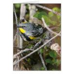 Yellow-rumped Warbler II Greeting Card