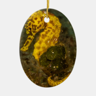 Yellow Seahorse Ceramic Oval Decoration