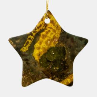 Yellow Seahorse Ceramic Star Decoration
