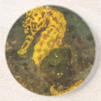 Yellow Seahorse Coaster