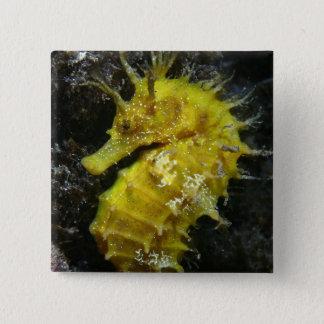 Yellow Seahorse   Hippocampus Guttulatus 15 Cm Square Badge