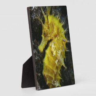 Yellow Seahorse | Hippocampus Guttulatus Plaques