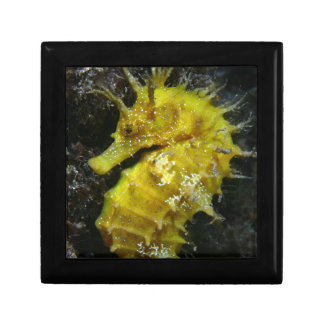 Yellow Seahorse | Hippocampus Guttulatus Small Square Gift Box