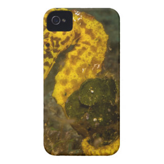 Yellow Seahorse iPhone 4 Cover
