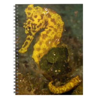 Yellow Seahorse Notebook