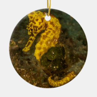 Yellow Seahorse Round Ceramic Decoration