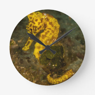 Yellow Seahorse Round Clock