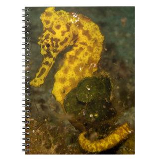 Yellow Seahorse Spiral Notebook
