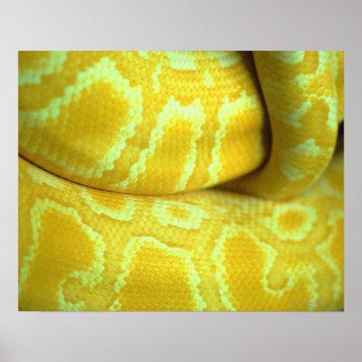 Yellow snakeskin poster