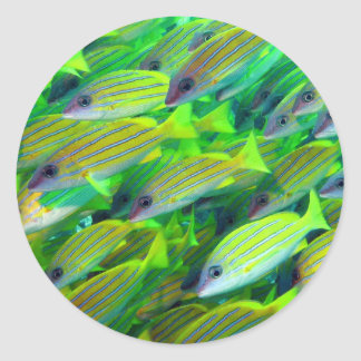 Yellow Snapper Wallpaper Classic Round Sticker