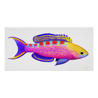 Yellow Spotted Anthias Reef Fish Poster