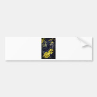Yellow Spring Bloom Bumper Stickers