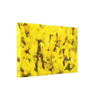 Yellow Spring Canvas Print