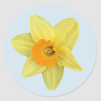 Yellow Spring Daffodil Classic Round Sticker