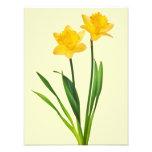 Yellow Spring Daffodils - Daffodil Template