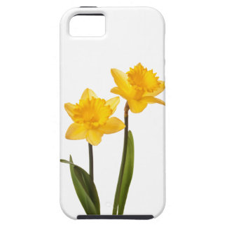 Yellow Spring Daffodils on White iPhone 5 Cover