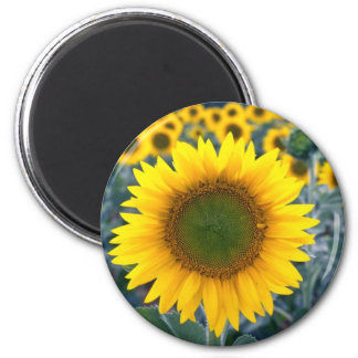 yellow Stand out from the crowd flowers Refrigerator Magnets